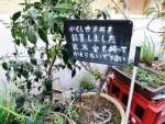 植木と隠しカメラ